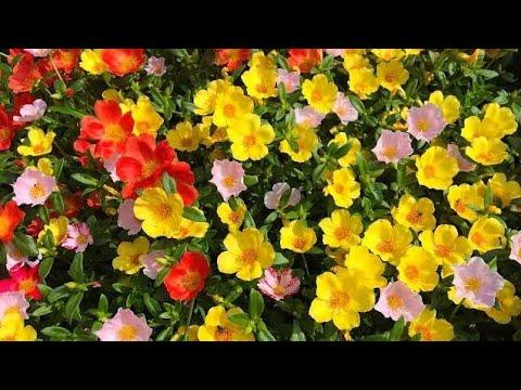 Best Summer Flowers List Of Summer Flowering Plants