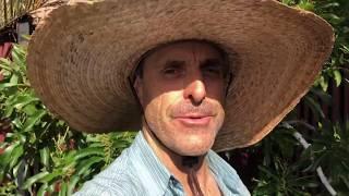6/16/19 Reed Avocado Fruiting Report #1