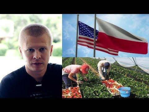 Польша и США безвизовый режим. Украина собирать клубнику в Польше
