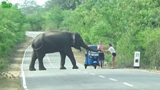 A lovely couple feeding a humble elephant. Please never attempt this, EVER!
