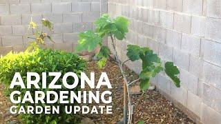 Arizona Gardening   Garden Update   In the Kitchen with Matt