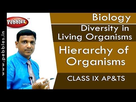 Hierarchy of Organisms : Diversity in Living Organisms | Biology | Class 9 | AP&TS