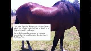 Equine Lordosis - The Facts