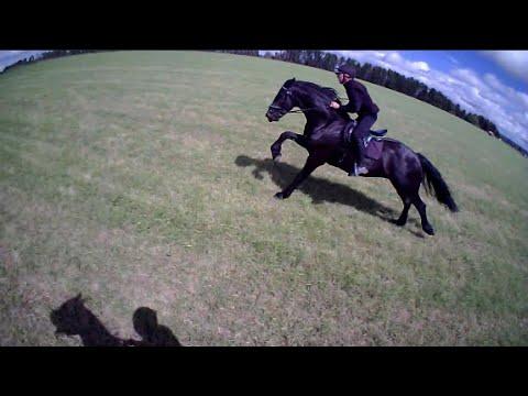 Friesian Horse races Arabian horse