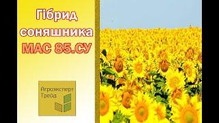 Подсолнечник Мас 93.СР  🌻, описание гибрида 🌻 - семена в Украине