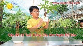 [Trồng Cây Cùng Lập] - Cậu Bé 10 Tuổi Trồng Cây Kim Ngân - Sài Gòn Hoa