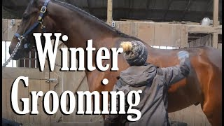 Winter Grooming + Tips | EquestrianBliss