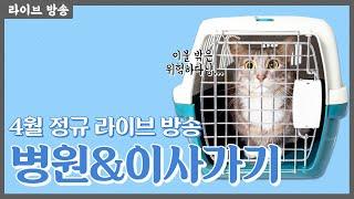 냥신티비 4월 라이브 고양이 병원가기, 이사가기 고민인…