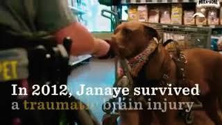 😱 We filmed a Commercial with Milk Bone Service Dog Colt