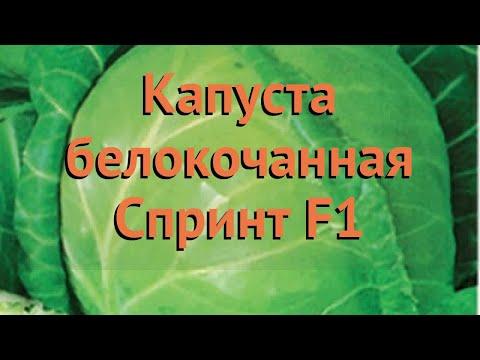 Капуста белокочанная Спринт F1 (sprint-f1) 🌿 Спринт F1 обзор: как сажать, семена капусты Спринт F1