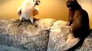 Смешные кошки смешные кошки видео компиляция 2016 || новые HD