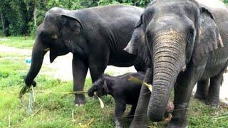 MENGENAL BINATANG DAN SUARA GAJAH ( ELEPHANT SOUND )