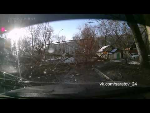 Упало дерево в Саратове