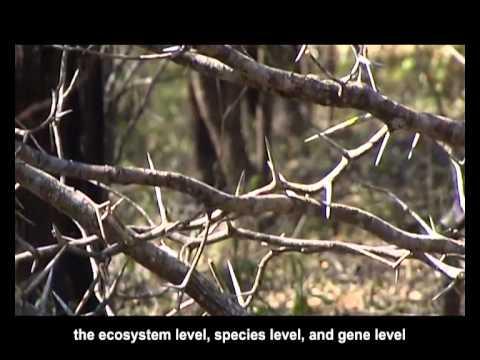 Biodiversity Conservation