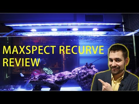 😎 Maxspect Recurve Review and Unboxing (Honest Review)