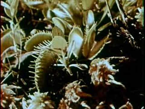 Greg Brown - A Poison Tree mp3 indir