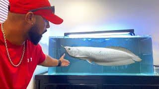 GETTING RARE ICE DRAGON FISH! *AROWANA* Inside The World's *LARGEST ONLINE MONSTER FISH STORE!*
