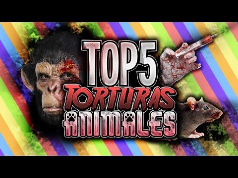 TOP 5 TORTURAS A ANIMALES MAS CRUELES Y DESPIADADAS