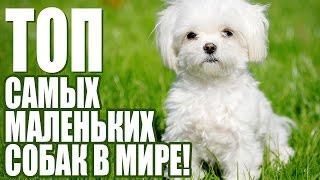 ТОП 10 маленьких собак / TOP 10 small dogs / best / лучшие