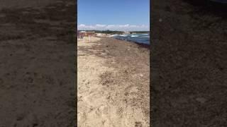 Spiaggia invasa dalla posidonia