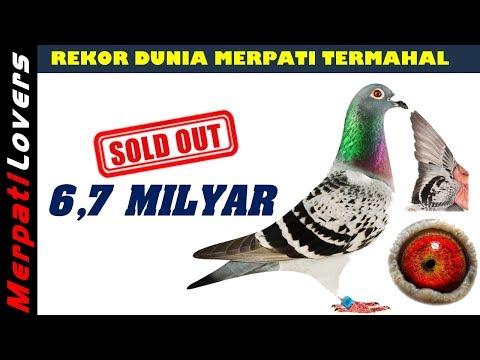 EDYAANN..!!!! Merpati Termahal DI DUNIA Harga 6 MILYAR | Most Expensive Pigeon