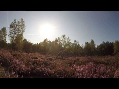 Nuvi - back valut | Dogfrisbee in SLOW MOTION |