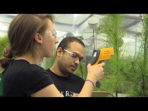 ORNL studies how some trees respond, recover after heat waves