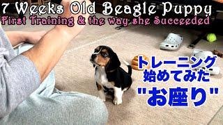 ビーグルって本当に賢い!犬・ワンちゃんと楽しく暮らすにはトレーニン...