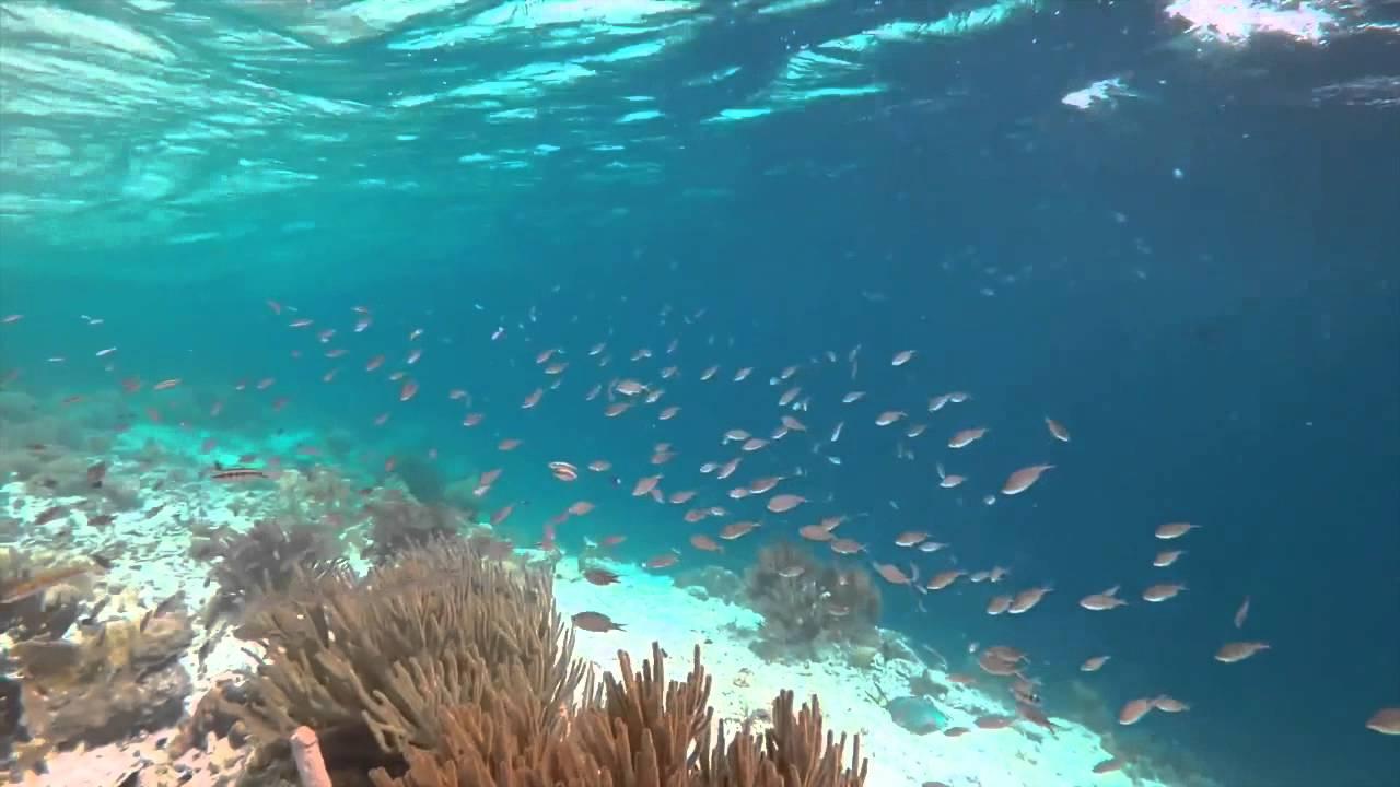 Muchos peces en el mar youtube - Fotos fondo del mar ...