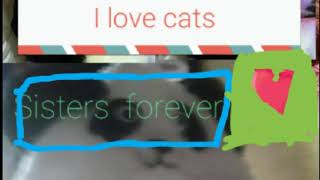 My cats wallpaper and my memory