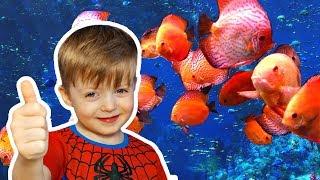 Океанариум Киев Красивые рыбки Релакс Видео Развлекательное видео для детей Детский Канал Lion boy