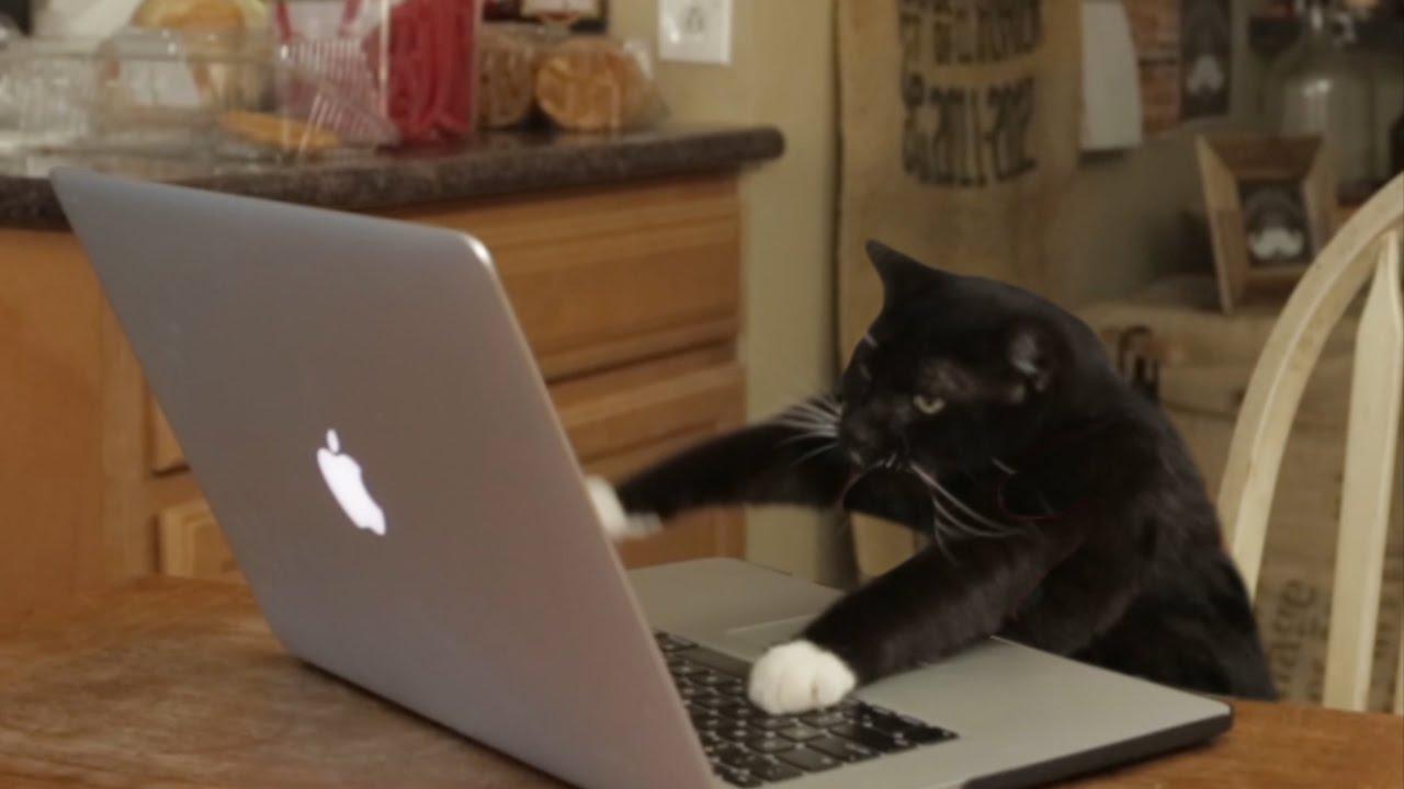 Aarons Animals  Facebook Hacker  YouTube