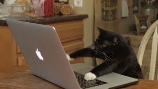 Aaron's Animals - Facebook Hacker thumbnail