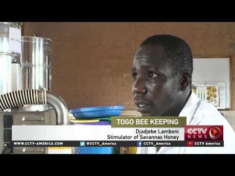 Togo's savannah honey market creates a buzz
