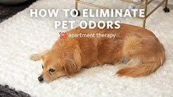 How to Eliminate Pet Odors   Apartment Therapy