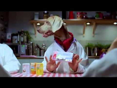 ICA-Stig reklamfilm: Avsnitt 370 Vilket hundliv - YouTube