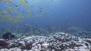 Diving Misool | Indonesia | Part 2