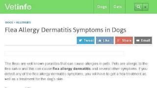 Signs Of Flea Bite Dermatitis On Dogs