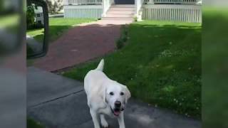Dog Gets Mail From Mailman