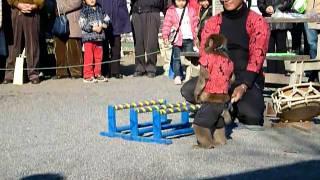 成田山の参道で猿回し