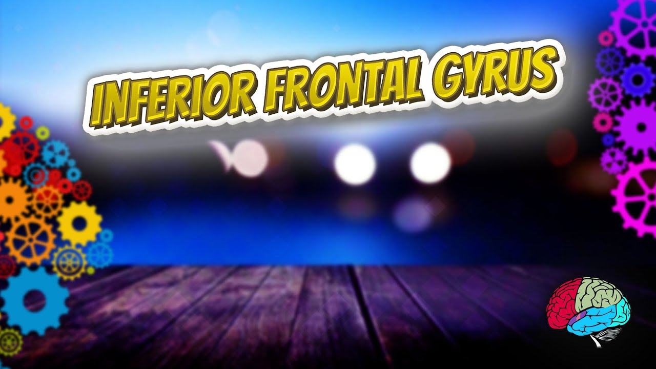 Inferior Frontal Gyrus Know It All Youtube