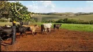 Sheep Embryo Farm 2
