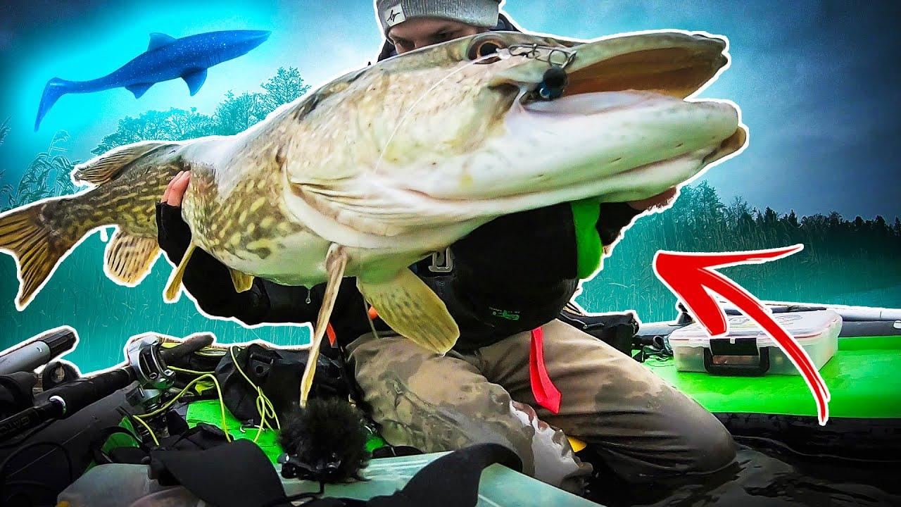 Shark Shad - Mommy Shark 20 cm - Kanalgratis