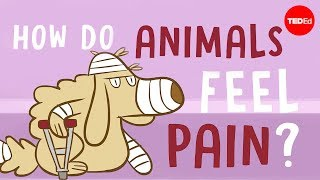 How do animals experience pain? - Robyn J. Crook