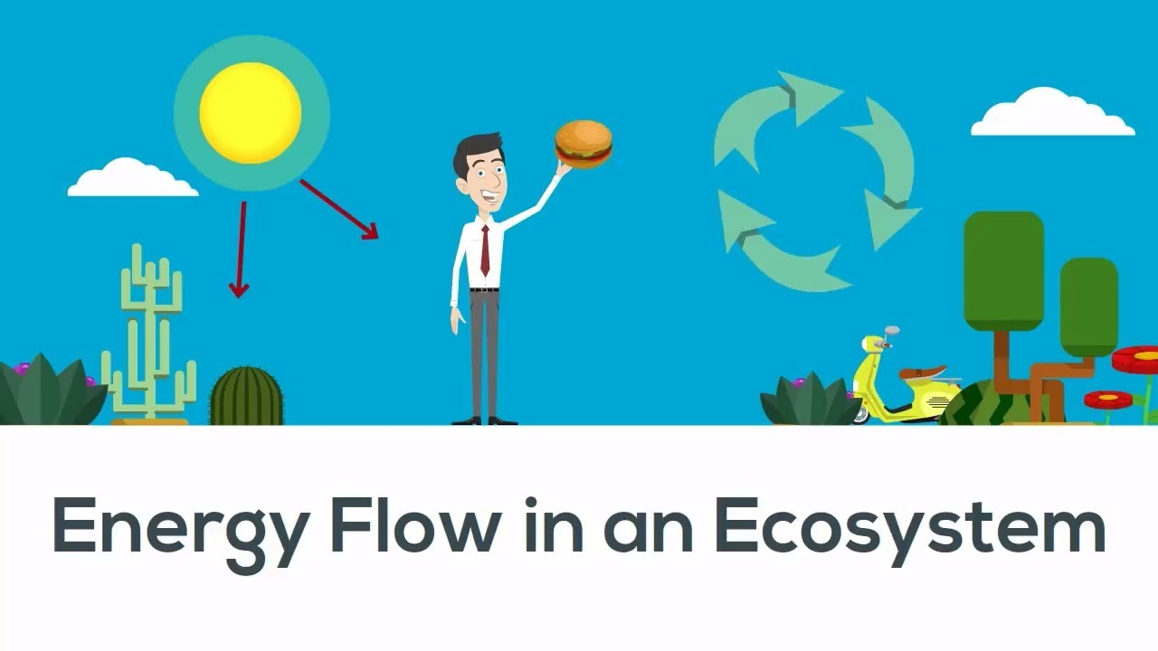 Energy Flow In Ecosystem Youtube