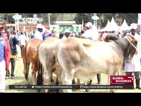 Breeders showcase their animals in Nairobi