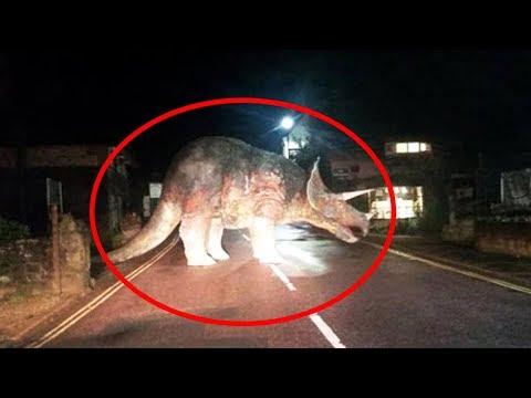 10 Динозавров, Снятых на Камеру
