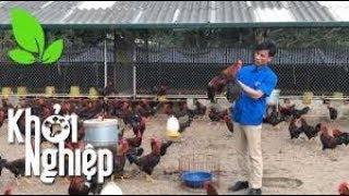 Trại gà thông minh khiến chuyên gia ngỡ ngàng  - Khởi nghiệp 370
