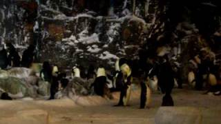 San Diego Sea World Penguins: Jyoti Mohanty