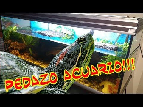 Acuario grande para tortugas de agua 450 litros youtube for Acuario tortugas